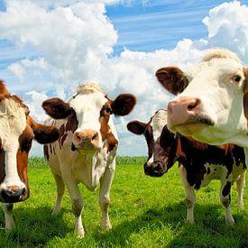 Vier kletsende koeien van Jan Brons