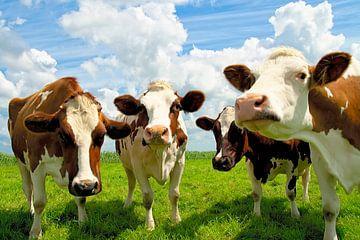 Vier kletsende koeien van