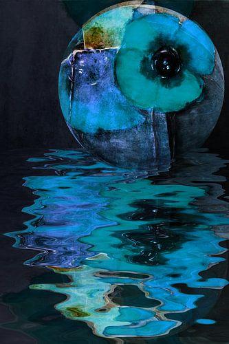 Schlafmohn - Blauer Mohn