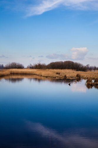 Oever van de Zwarte Brekken, een meer in Friesland vlakbij IJlst. One2expose Wout Kok Photography van