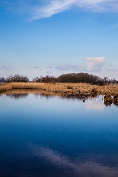 Oever van de Zwarte Brekken, een meer in Friesland vlakbij IJlst. One2expose Wout Kok Photography van Wout Kok