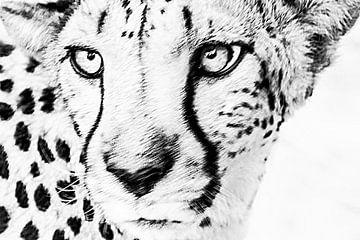 Gepard, Wildtiere von Caroline Drijber