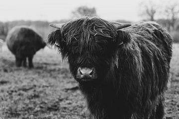 Ein schottischer Highlander in Schwarz und Weiß von Manon Moller Fotografie