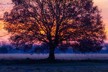 Lever de soleil derrière un arbre