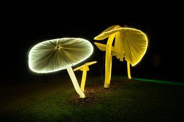 Lichtgevende Paddestoelen van Els Hattink