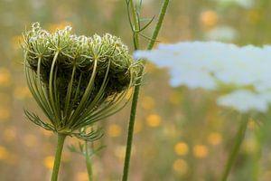 Flowerpower van Miriam Duda