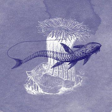 Delfter Blau-Loricaria-Fisch von Jadzia Klimkiewicz