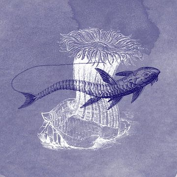 Delfts blauwe loricaria vis van Jadzia Klimkiewicz