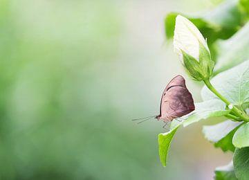 Flugbereit - Vlindertuin Orchideeënhoeve von Gerda Hoogerwerf