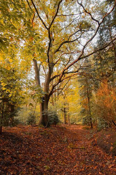 Herbst im Wald von Robbert Wille