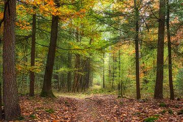 Herfst in het bos met Naald en loofbomen