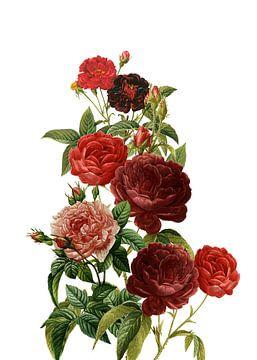Vintage Red Roses sur Uta Naumann