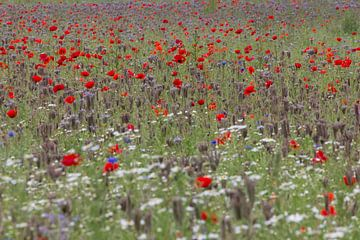 bloemen veld van ton vogels