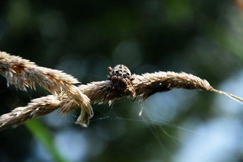 Itsy Bitsy Spider van Arc One