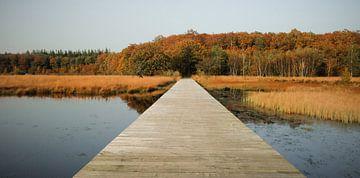 een pad naar de herfst van Karin vanBijleveltFotografie