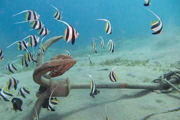 Un banc de poissons à l'ancre sur Daniëlle van der meule