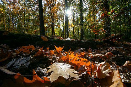 Kleurrijke herfstbladeren in het bos met najaarslicht