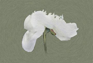De Dansende Pioen - Schilderij van Schildersatelier van der Ven