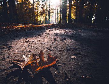 Herbstblätter von Jeroen Mondria