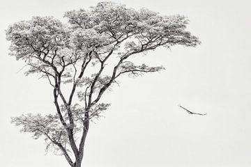 die Afrikanischen Adler, Piet Flour von 1x