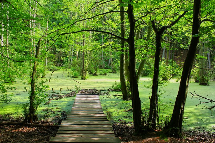 Grüne Oase von Ostsee Bilder