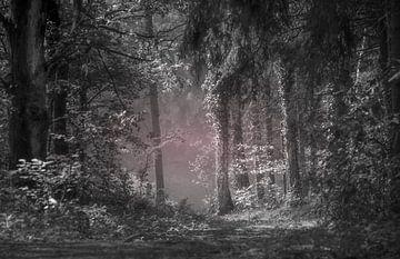 zwartwit foto van bos in ochtendschemer van Teo Goudriaan