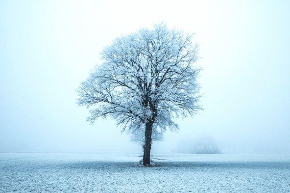 Alleen in de winter van Gert Hilbink