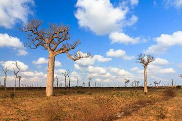 Baobab wolken von Dennis van de Water