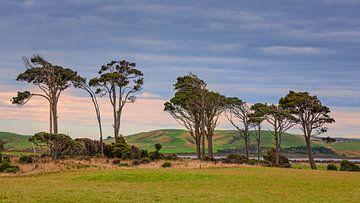 The Catlins, Nieuw-Zeeland van Henk Meijer Photography