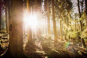 Herfstzon in het bos sur Nick van Dijk