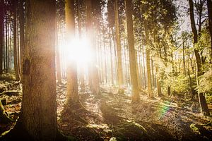 Herfstzon in het bos van