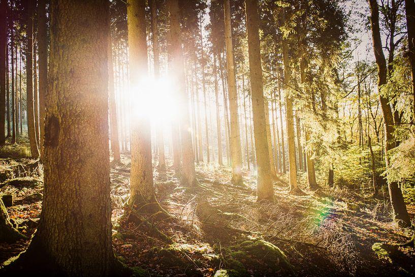 Herfstzon in het bos van Nick van Dijk