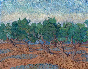 Olivenhain, Vincent van Gogh