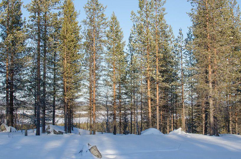 Lapland in avond zon van Anouk Hol