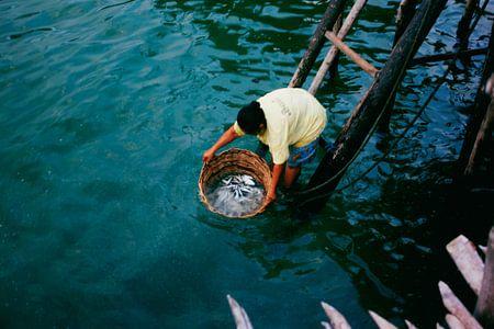 Vissersvrouw haalt visopbrengst binnen