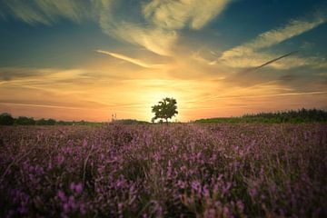 Sonnenuntergang im Moor von Joran Quinten