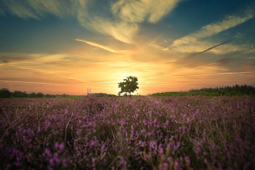 Zonsondergang op de heide van Joran Quinten