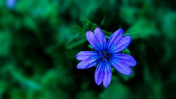 Blue flower only van Jenny Heß