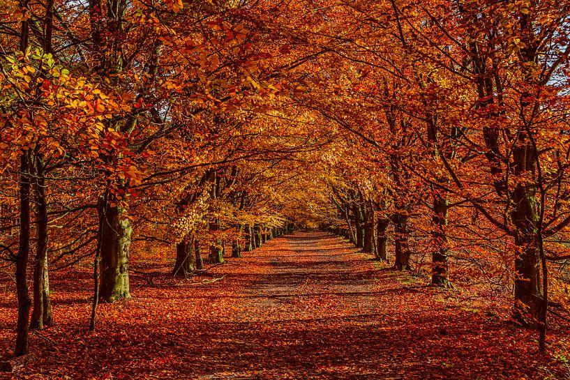 Herfst Kleuren van Bert Heuvels