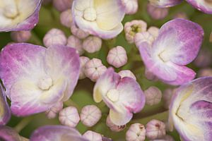 Macro bloemenzeetje van