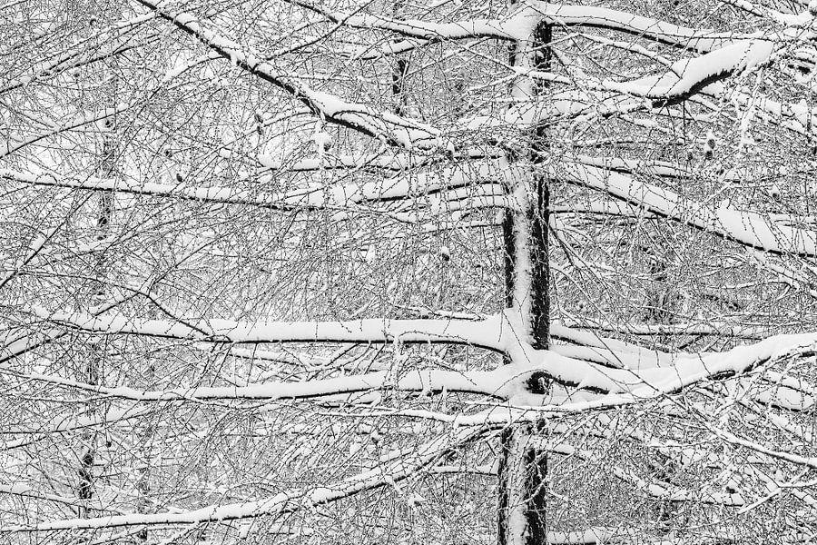 Winter van Gonnie van de Schans