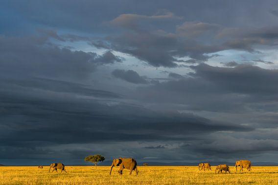 Olifanten op de savanne