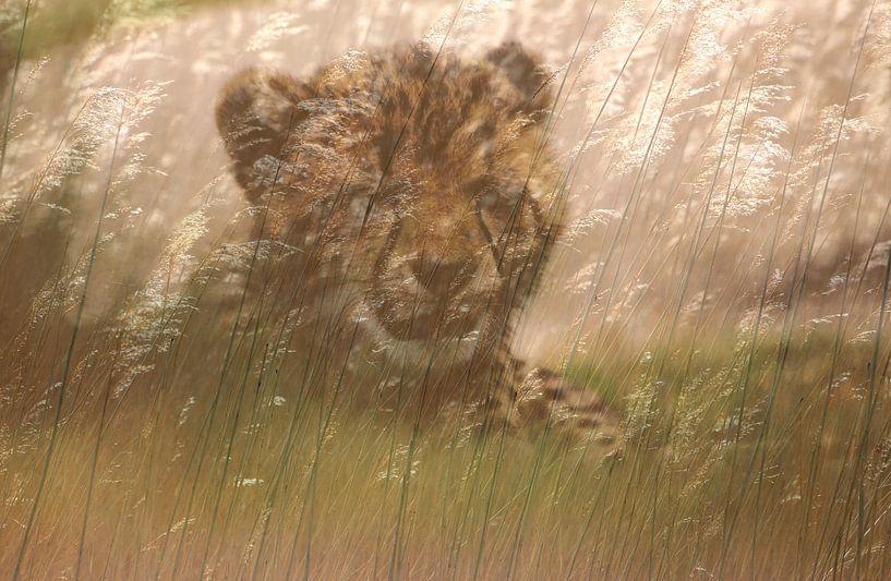 Cheeta welp in het gras. Digitale kunst. Afrika van Bobsphotography
