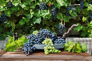 grote trossen blauwe en witte druiven van
