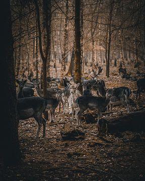 Herten in het bos van Arnold Maisner