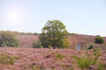 Heide in Blütezeit von Valerie de Bliek