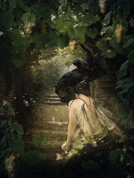 Druivenboom van Babette van den Berg