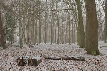Schnee im Wald von Sabina Meerman