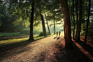 Wandeling in de bossen van Annie Snel