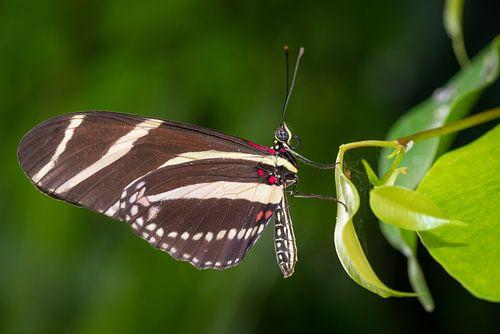 Close up vlinder op een blad